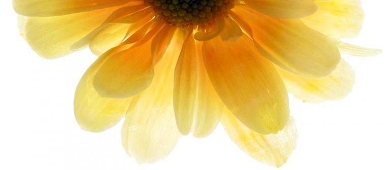 Yellow Flower Lower Half