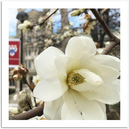 Spring Flowers (Spiritual Tool #2)